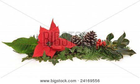 Poinsettia and Winter Fauna