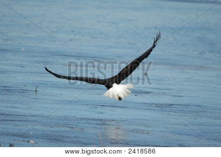 Bald Eagle Exit