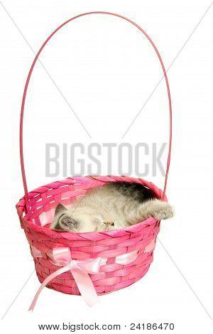 Kitten sleeping in a basket