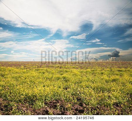 sky and fields, loam ground