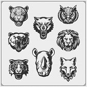 Vector Set Of Animals Head. Fox, Wolf, Tiger, Rhino, Bear, Owl, Leopard And Lion. poster