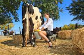 pic of milkmaid  - Business woman milking cow on farm - JPG