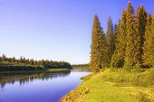 Huge Spruce Trees As Part Of The Taiga In The Circumpolar Urals. The Shore Of The Taiga River Severn poster