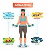 Metabolism Concept Vector Illustration Diagram, Biochemical Body Cycle. Eating Healthy, Drinking Wat poster