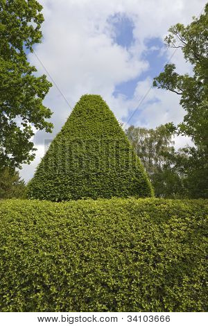 Topiary Background