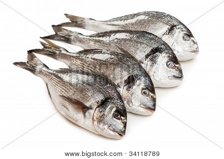 Gilt-head Fish Food