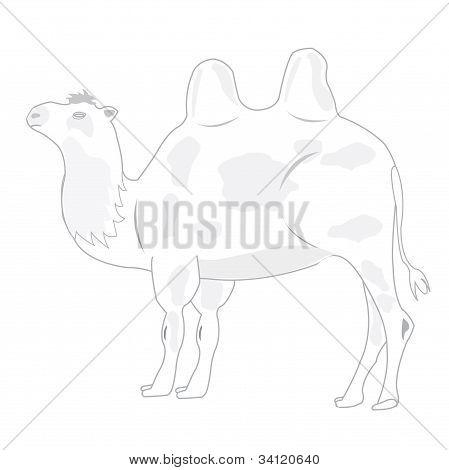 Tekening van de kameel op witte achtergrond