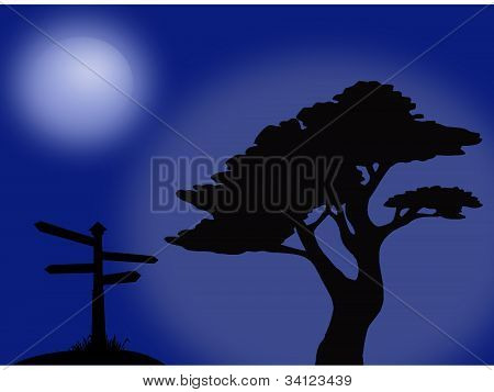 Moonlight tree silhouette