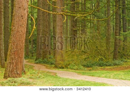 Pathway Into The Forest