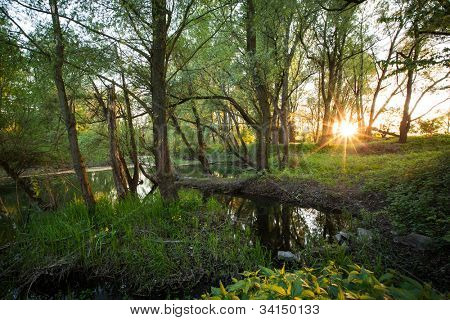 Beautiful riparian forest scenery on a lovely summer evening