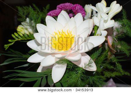 Nymphaeaceae A Beautiful Flower Arrangement
