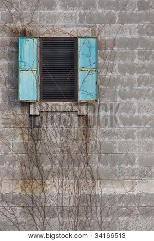 Window and parasite plant on a brick wall