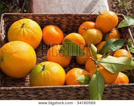 Mandarins in box outdoor