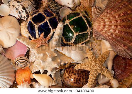 Cluster Of Seashells
