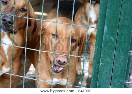 Stray Dogs In The Animal Shelter
