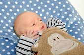 picture of premature  - Face of a premature newborn baby on a polka dot blanket - JPG