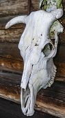 Old Animal Skulls. Worship Of Pagan Gods And Trees. Mystic And Magic Concept. poster