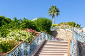 A Wide Staircase And Green Bushes On The Sides. Steps Leading To The Top Where The Palm Tree And Flo poster