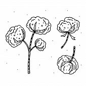 Cotton Flower Doodle Vector Clipart. Herbs. Organic Ingredients. Eco Friendly, Vegan.  Sticker, Icon poster
