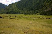 Pasture With Stones At The Foot Of A High Hill. poster