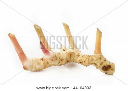 Galangal (blue Ginger) In Isolated White Background