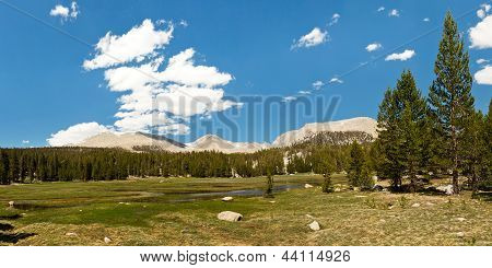 Sierra Nevada Meadow