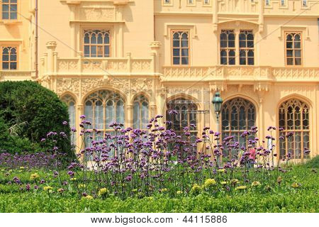 Flowering Verbena
