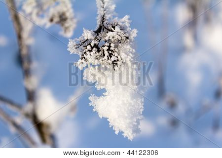 Hoarfrost On The Branch Of Bush As A Cluster On A Background Sky