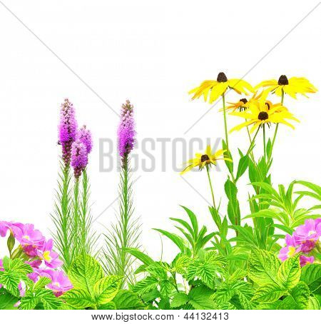 Summer flowers and green leaves. Isolated over white