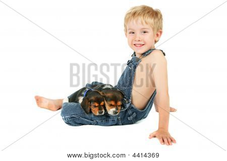 Young Boy Sitting With Beagle Puppies On His Lap