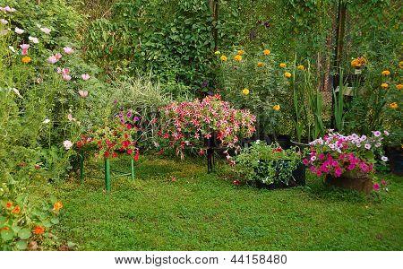 blooming flowers in summer yard garden
