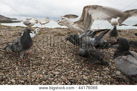 Las gaviotas y palomas