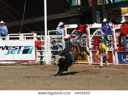 Cowboy Trying To Ride A Wild Bull,