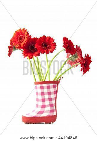 Red Gerbera's