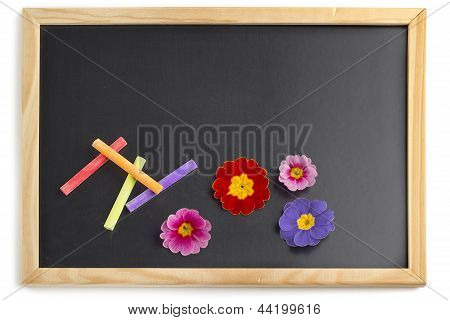 blackboard with colorful chalks and primrose blossoms