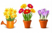 Collection of spring and summer colorful flowers in pots and watering can. Vector