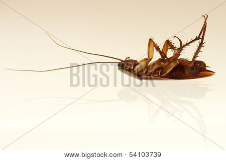 Cockroach Profile