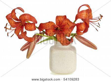 Gentle Red Garden Lily