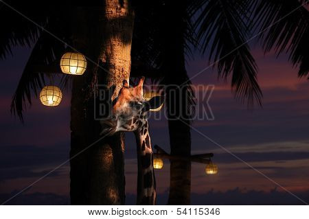 Head Of A Giraffe Along A Palm Tree At Night