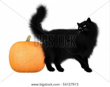 Halloween Black Cat And Pumpkin