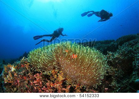 Coral, Anemone, Clownfish and Scuba Divers underwater