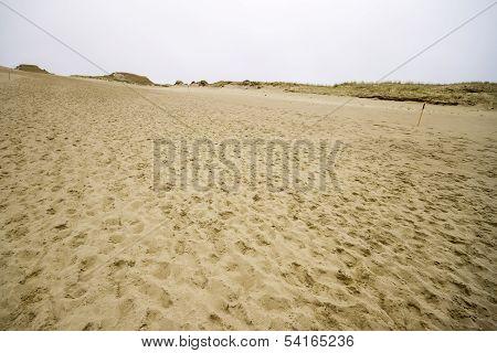 View Of Dead Dunes