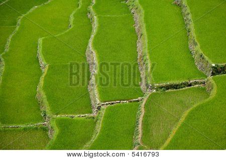 Banaue Rice Terraces , Philippines