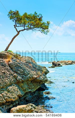 Landscape With A Lonely Pine Tree On The Background Of The Sea