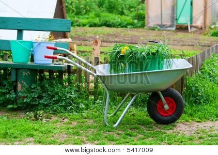 Wheelbarrow With Bucket And Grass.