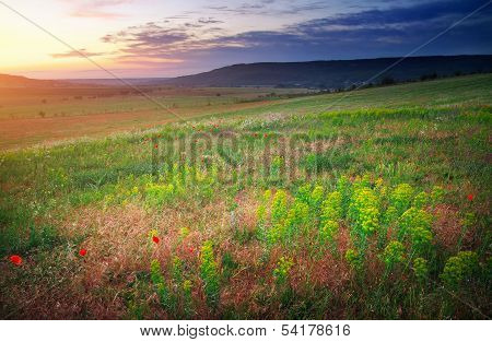 Beautiful Landscape. Sunset In Crimea. Field In Crimea.