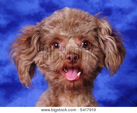 One Happy Pup