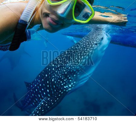 Young lady snorkeling with whale shark