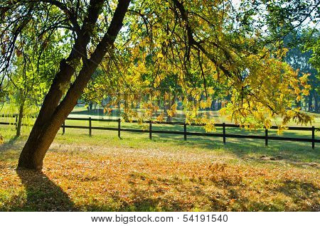 Tree with green and yellow leaves by a wooden fence at early autumn