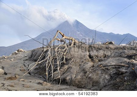 Mount Merapi's Eruption Burns Trees